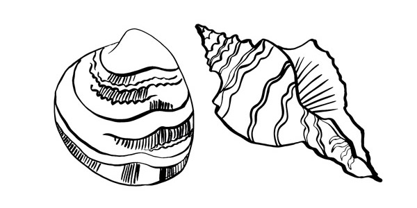 clam and quahog shells-01